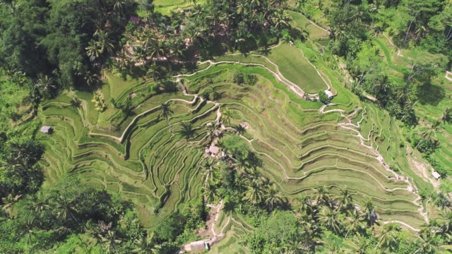 high above rice terraces - rice terrace stock videos and b-roll footage