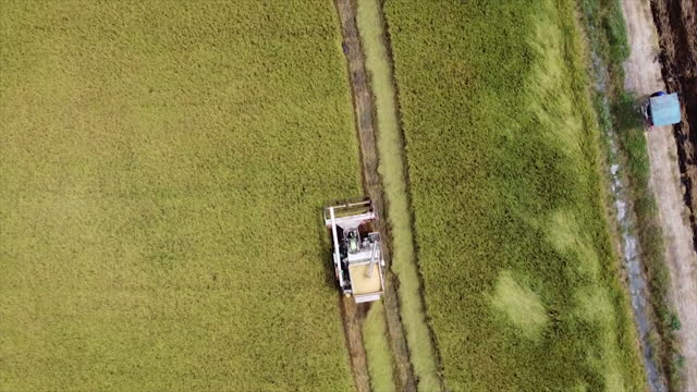 high aerial view from drone farm harvesting machinery tractor rice car working on dry or ripe rice paddy crop field thailand - execution stock videos & royalty-free footage