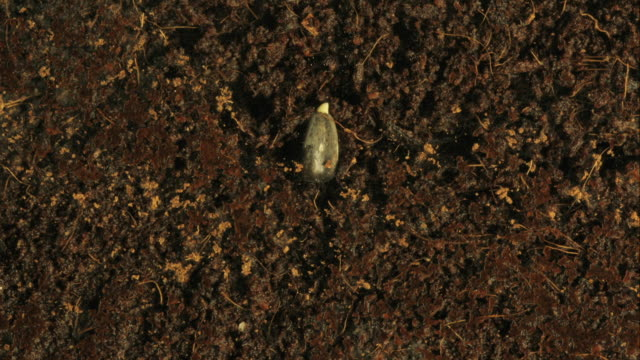 High Angle  _ A seed germinates in moist soil
