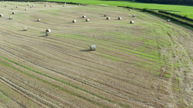 high angle aerial tracking shot of round straw bales in a scottish field - johnfscott stock videos & royalty-free footage