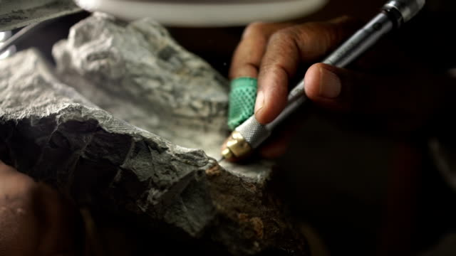 high angle cu archaeologist preparing fossil under microscope/ muldersdrift/ south africa - archaeology stock videos & royalty-free footage
