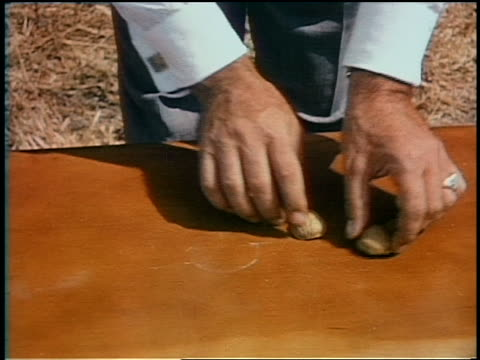 vídeos de stock e filmes b-roll de 1951 high angle close up man's hands playing walnut shell game on table - sorte
