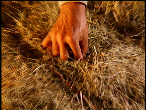 high angle close up zoom in male hand finding needle out of haystack - needle plant part stock videos & royalty-free footage