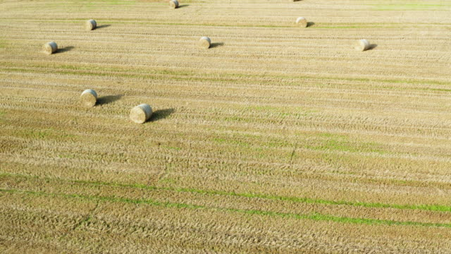 high angle drone dolly shot of round straw bales in a scottish field - johnfscott stock videos & royalty-free footage