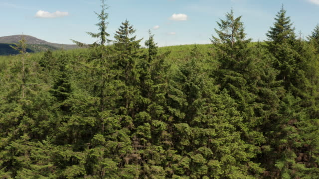 high angle drone view of an area of forest and blue sky in rural south west scotland - galloway scotland stock videos & royalty-free footage