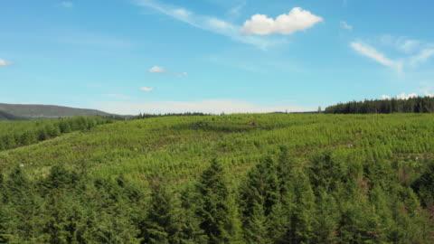 vídeos y material grabado en eventos de stock de vista de drones de gran ángulo de un área de bosque y cielo azul en el suroeste rural de escocia - pino conífera