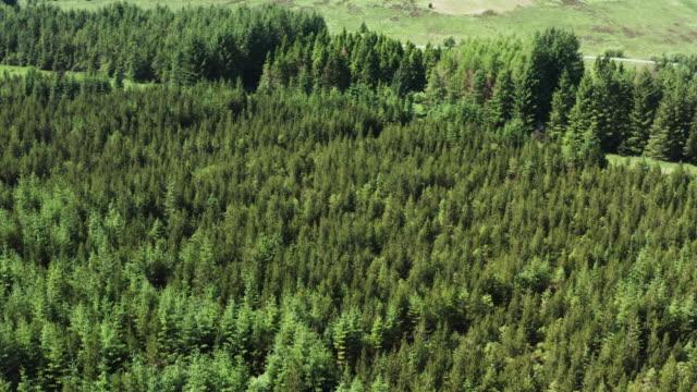 vidéos et rushes de vue de drone à angle élevé d'une zone de forêt dans le sud-ouest rural de l'ecosse - remote location