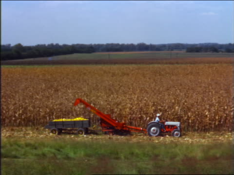 1950 high angle pan farmer driving corn picker past camera in field - cinematografi bildbanksvideor och videomaterial från bakom kulisserna