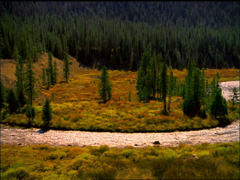 high angle pan of green river and pine forest in valley / wyoming - river green stock videos & royalty-free footage