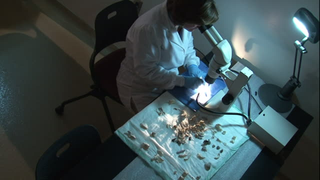 high angle hand-held - a forensic scientist studies bones under a microscope. / usa - kriminaltechnik stock-videos und b-roll-filmmaterial