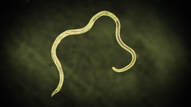 high angle hand-held - a parasitic worm floats in front of a green background in a computer-generated animation. - worm stock videos and b-roll footage