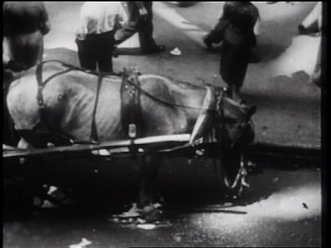 stockvideo's en b-roll-footage met b/w 1939 high angle horse in harness eating from feedbag on city street / nyc / documentary - werkdier