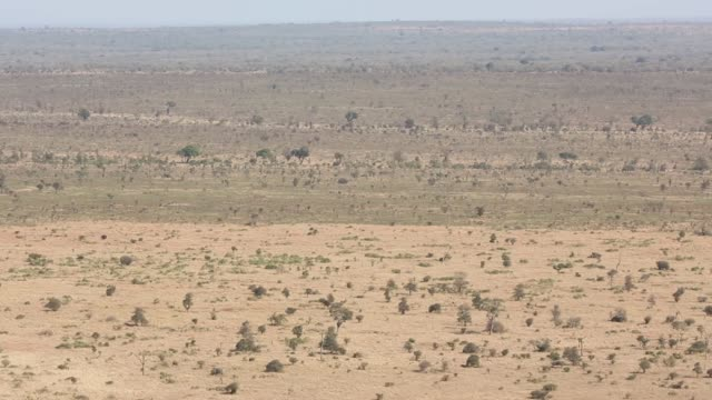 high angle landscape shot of the savannah in kruger national park the kruger national park was established in 1898 and is south africa's premier... - 自然保護区点の映像素材/bロール