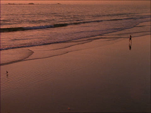 stockvideo's en b-roll-footage met high angle long shot zoom in woman jogging in surf on beach at sunset / santa monica, california - jogster