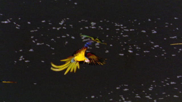high angle pan macaws flying over water + landing on cliff side / tambopata, peru - tambopata stock videos and b-roll footage