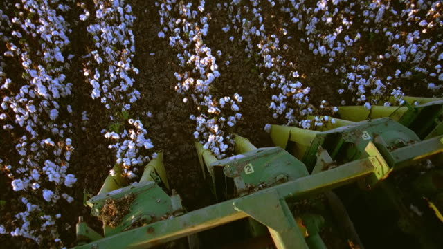 high angle medium shot combine point of view combine blades cutting through cotton rows on farm / thatcher, arizona - cotton stock videos and b-roll footage