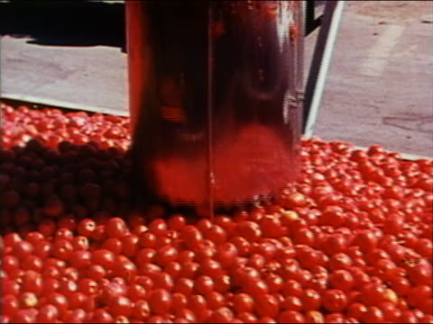 1970 high angle medium shot tomato eating machine digs in to pile of tomatoes - 潰された点の映像素材/bロール