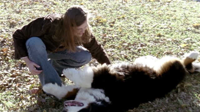 stockvideo's en b-roll-footage met high angle medium shot woman playing with bernese mountain dog in front yard - alleen één mid volwassen vrouw