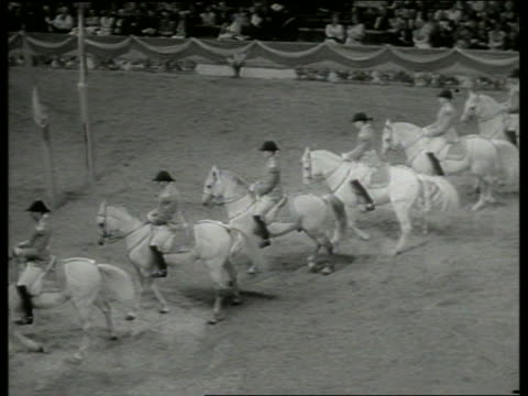 b/w high angle men on horses walking sideways / lippizans - 草食性点の映像素材/bロール