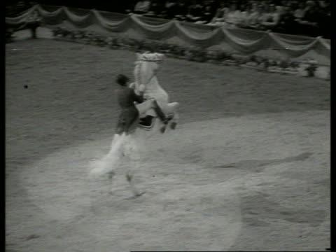 vídeos y material grabado en eventos de stock de b/w high angle of man on horse jumping on hind legs / lippizan - herbívoro