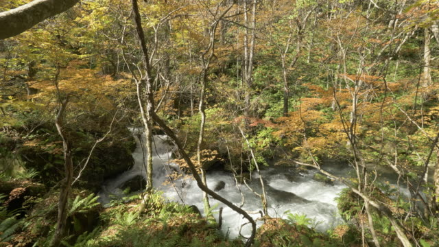 high angle, oirase river flows through autumn forest in japan - satoyama scenery stock videos & royalty-free footage