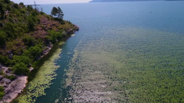 high angle over ocean with lily pads, and forest - akvatisk organism bildbanksvideor och videomaterial från bakom kulisserna