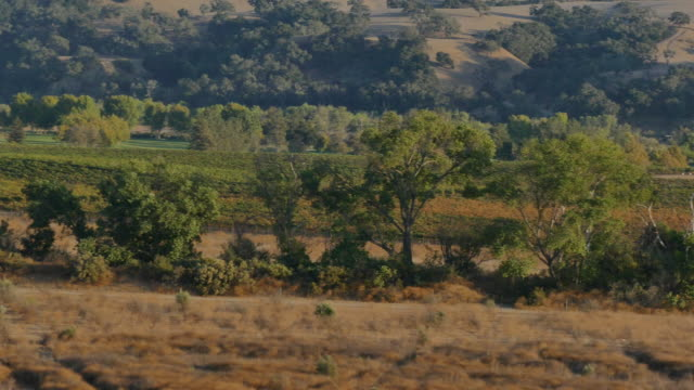 4k high angle pan vineyard and hills to a rustic barn late afternoon - サンタイネス点の映像素材/bロール