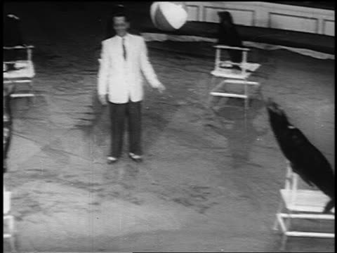 vídeos de stock, filmes e b-roll de b/w 1955 high angle pan seal throwing beach ball to second seal who catches it on nose / man watching - stunt