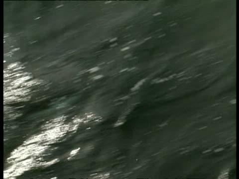 vidéos et rushes de high angle shot of peales dolphin, lagenorhynchus australis, swimming through sea, antarctica - groupe de mammifères marins