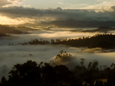 vídeos de stock e filmes b-roll de wa high angle, silhouetted rainforest emerging from misty scene, dawn, malaysia - paranormal