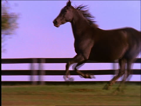 high angle slow motion pan of horses running in field near fence - 草食性点の映像素材/bロール
