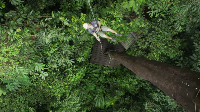 High angle slow motion shot of man ziplining down tree in rain forest / Quepos, Puntarenas, Costa Rica