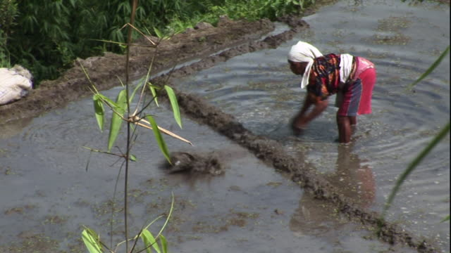 high angle static - a woman scoops water as she plants rice. / philippines - philippines stock videos & royalty-free footage