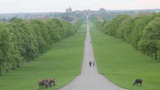 high angle static shot of the long walk at windsor great park in great britain. red deer are seen grazing in the foreground, and windsor castle is... - environment or natural disaster or climate change or earthquake or hurricane or extreme weather or oil spill or volcano or tornado or flooding stock videos & royalty-free footage