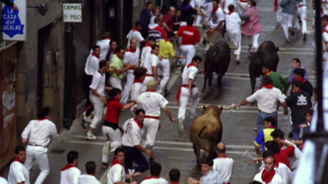 high angle tilt up tilt down pan crowd of people running with bulls / man falls over in front of bull / pamplona, spain - crowd running scared stock videos & royalty-free footage