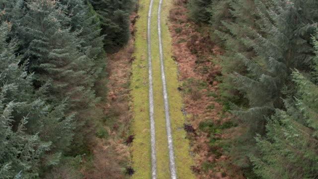vídeos y material grabado en eventos de stock de vista de ángulo alto capturada por un dron de una pista a través de un bosque de pinos escocés en invierno - carretera de tierra