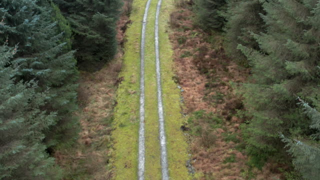 high angle view captured by a drone of a track through a scottish pine forest in winter - johnfscott stock videos & royalty-free footage