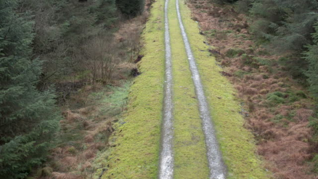 vídeos de stock e filmes b-roll de high angle view captured by a drone of a track through a scottish pine forest in winter - johnfscott