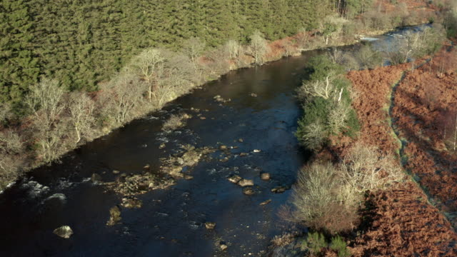 high angle view of a river running through an area of pine forest with frost on the ground - johnfscott stock videos & royalty-free footage