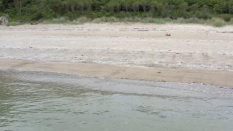 夏の日にスコットランドのビーチの高角度の景色 - 干潮点の映像素材/bロール