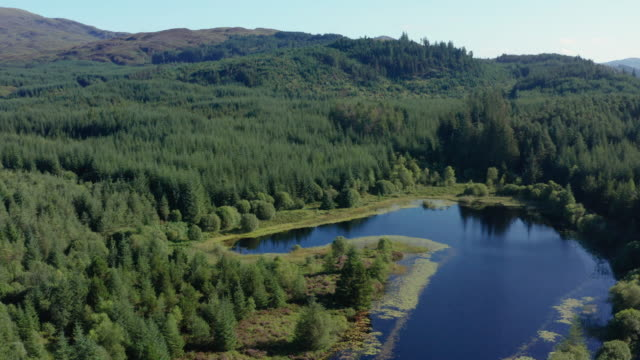 vista ad alto angolo di un piccolo lago scozzese in un'area boschiva a dumfries e galloway, nel sud-ovest della scozia - scottish culture video stock e b–roll