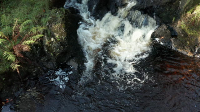high angle view of a small stream in a section of woodland in rural south west scotland - johnfscott stock videos & royalty-free footage