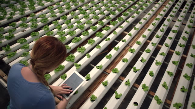 high angle view of a woman working on a digital tablet in a nursery - greenhouse stock videos & royalty-free footage