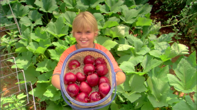 vidéos et rushes de high angle view of boy holding basket of apples - panier