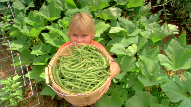 high angle view of boy holding basket of beans - see other clips from this shoot 1425 stock videos and b-roll footage