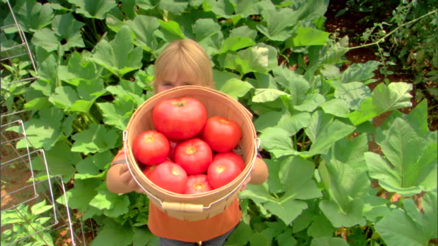 high angle view of boy with basket of tomatoes - see other clips from this shoot 1425 stock videos and b-roll footage
