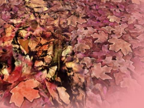 vidéos et rushes de high angle view of fallen leaves - panoramique rapide