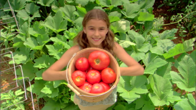 high angle view of girl with basket of tomatoes - see other clips from this shoot 1425 stock videos and b-roll footage