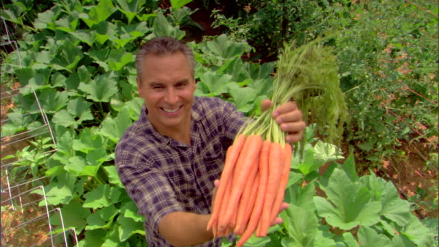 high angle view of man holding bunch of carrots - see other clips from this shoot 1425 stock videos and b-roll footage