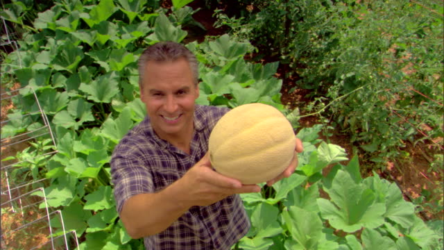 high angle view of man holding cantaloupe - see other clips from this shoot 1425 stock videos and b-roll footage